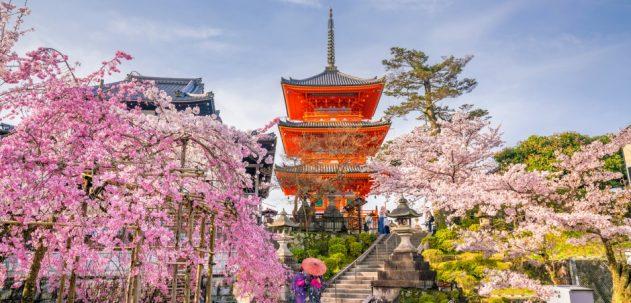 Тур в Японию за красотой